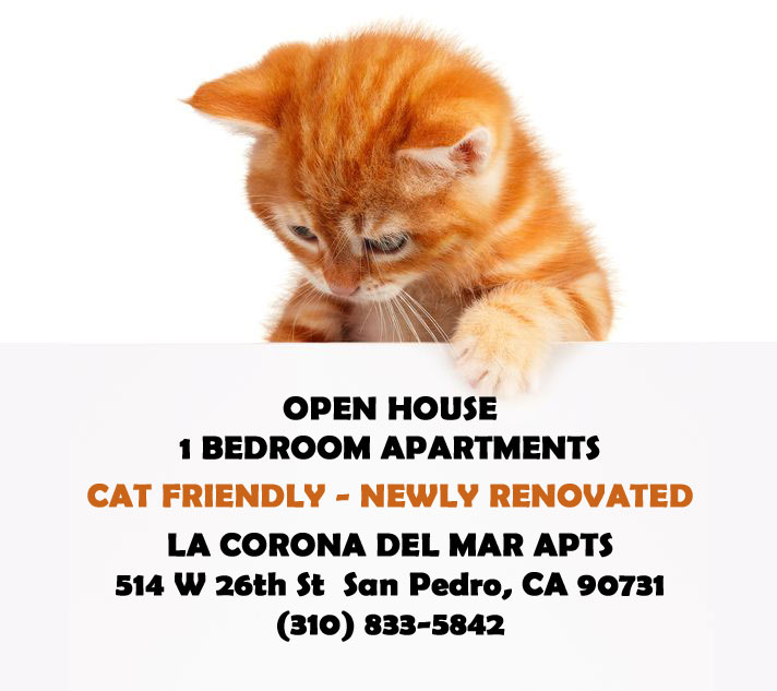 Pet Friendly Apartments For Rent In San Pedro